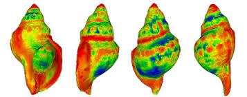 Shows Acidified Study Increasingly Oceans Snail Dissolve Shells In Sea q1pBHP8p