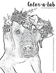 Therapy Dog Coloring Pages Smithfarmspacom