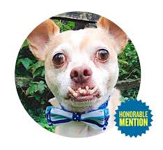 Image result for world's ugliest dog contest 2019