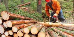What Does A Logging Worker Do