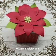 Weihnachtssterne Immer Wieder Schön Weihnachtsstern