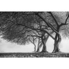 15 liked on polyvore featuring home home decor wall art metal tree wall art black and white tree wall art  on wall art black and white trees with black and white photography print fine art landscape fog mist