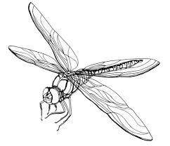 Free Printable Dragonfly Coloring Pages For