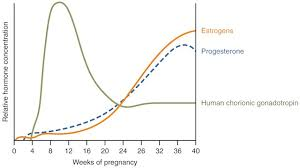 Progesterone And Pregnancy What Levels Are Optimal