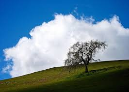 Can Trees Make Clouds Form Popular Science