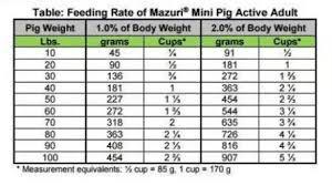 Can A Pig Overeat Pet Pig World