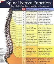 Chiropractic Body Chart Function Of Our Spine Chart Richmond Chiropractic Centre