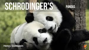 Quotes About Pandas Delectable Schrodinger's PANDAS