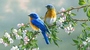 Couple of birds on Tree Branches HD ...