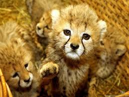 Cool Cute Animal Wallpapers For Desktop ...