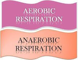 Complete The Chart For The Stages Of Cellular Respiration Difference Between Aerobic And Anaerobic Respiration With