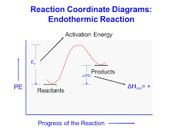 Endothermy Vs Ectothermy Venn Diagram Endothermic Vs Exothermic Venn Diagram Magdalene Project Org