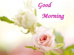 good morning images for whatsapp rose flower good morning image for whatsapp friends