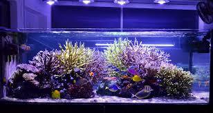 reef aquarium orphek led light