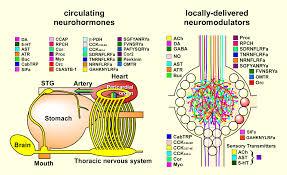 single phase ac generator wiring diagram images phase wiring wiring diagram besides 3 phase reversing contactor