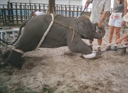animal cruelty circuses animal training