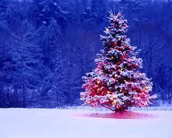 Xmas Tree Wallpapers - Top Free Xmas ...
