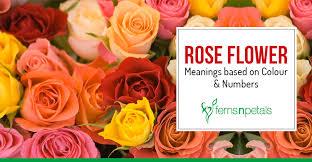 rose flower meanings based on colour