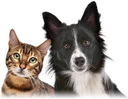 Image result for Managing your pet care budget