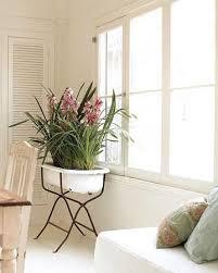 vintage baby tub indoor planter