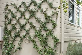 make a wire wall trellis