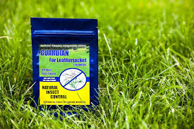 guardian nematode lawn guardian for leatherjacket cranefly the home depot canada