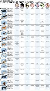 Dog Breed Compatibility Chart A Closer Look At The 15 Most Popular Dogs In The U S