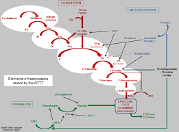 Blood Clotting Chart My Miracle 3 Coagulation Cascade