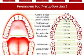 Permanent Teeth Eruption Chart Primary And Permanent Teeth Eruption Chart Visual Ly