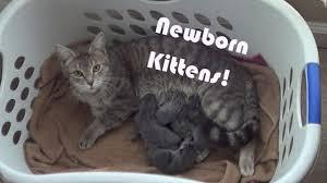 newborn gray kittens. Modren Gray And Newborn Gray Kittens T