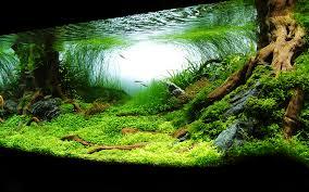Wallpapers Aquarium Braves Desktop ...
