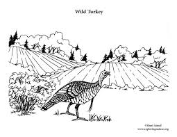 wild turkey coloring pages. Brilliant Pages To Wild Turkey Coloring Pages S