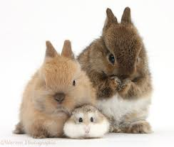cute baby rabbits. puppy \u0026 red guinea pig cute baby rabbits n