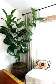 large white indoor plant pots appealing large indoor plant large indoor plant pots appealing large indoor
