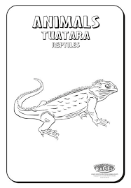 Small Picture 16 best Tuatara images on Pinterest Reptiles Lizards and New