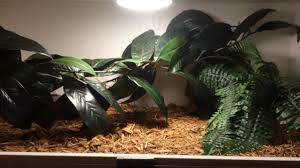 pvc reptile enclosure heating lighting and building details