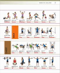 Back Workout Chart Step By Step Strength Training