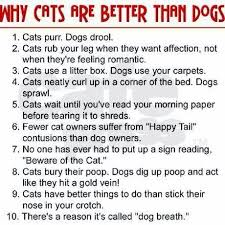 dogs make better companions than cats essay com dogs make better companions than cats essay