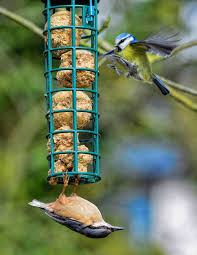 Carrie Ashton  'Down The Nuthatch' ...