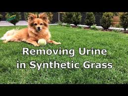 urinefree removing urine in synthetic grass