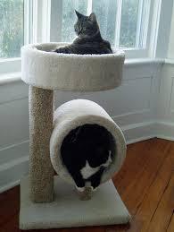 Furniture: Cat Box - Pet Homes