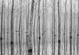 Birch Forest Fotobehang Behang Bestel Nu Op Europostersbe