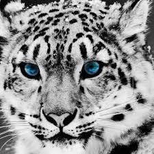 background images animals. Beautiful Background Animals IPad Background 3 To Images P