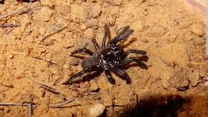 the world s oldest spider lived to be 43 before a wasp s sting did her in cnn