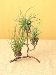 tree plant holder copper wire air plant tree tree plant hangers tree plant holder