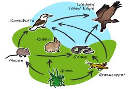 LS2: Ecosystems: Interactions, Energy, and Dynamics - WBT Science Project