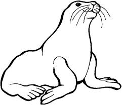 Small Picture Preschool Kids Love Animal Seal Coloring Page Coloring Sky