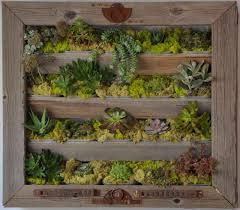 living wall created by brock mccormick on live succulent wall art with succulents