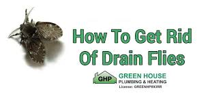 how to get rid of drain flies green