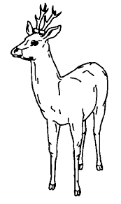 Dieren Kleurplaten Hert